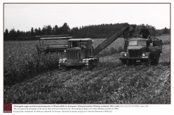 1964 - The corn-growing campaign of the Soviet time arrived at Setomaa, too. Harvesting of silage corn at the Obinitsa sovkhoz in 1964.