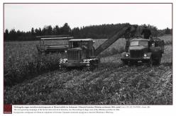 1964 - Nõukogude-aegne maisikasvatuskampaania ei läinud mööda ka Setomaast. Silomaisi koristus Obinitsa sovhoosis 1964. aastal.  Foto: EFA.331.P.0-87098, Armin Alla